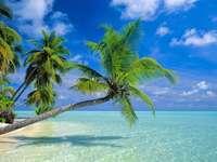 Pláž, slunce - Pláž, slunce, voda, dovolená