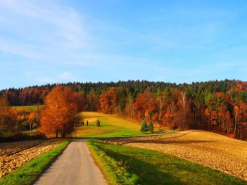 autumn view - In Poland, autumn is pretty, everything takes on colorful colors, leaves are golden and fall from tr
