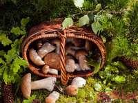 Гъби от полски гори
