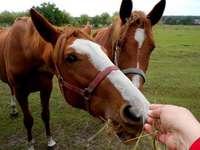 horses, my favorite