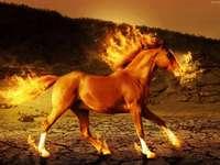 cheval de feu