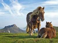 Pracovní koně