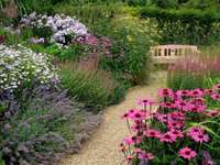 Grădină din curte - Grădină colorată din curte
