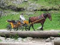 Werkende pony - Rijtuigen rijden in de bergen