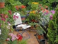 Egen trädgård - Färgglada på balkongen