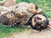 Dog and cat -