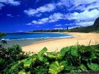 Na pláži jsou palmy - Z pláže je pohoří