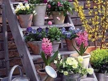 Vasi di fiori con scala