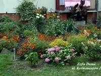 Egy színes kert - Szép kilátás a ház ablakaira