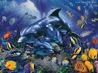 golfinhos em um recife de coral