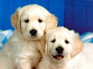 krásné psy - sladké písničky, které jsou úžasné