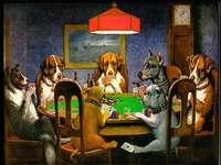 kutyák pókerezni