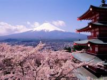 Sakura-Japan