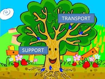 tronco dell'albero - parte della pianta con fotosintesi