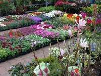 Дисплей с цветя