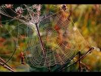 Toile d'araignée d'été indienn - babe lato pajęczyna