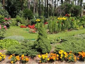 Summer colors - Różne kwiatki pod lasem