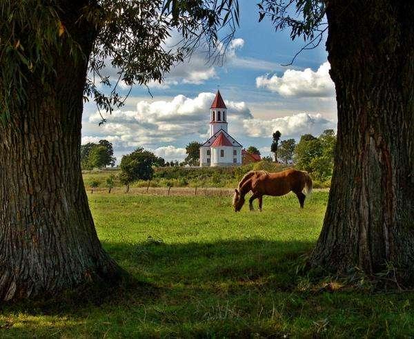 chiesa in Suraż - kościół w Surażu, drzewa, koń
