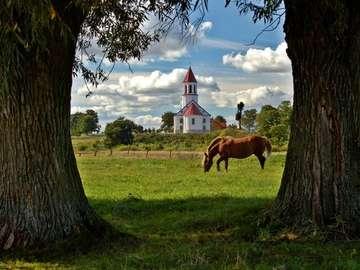 kościół w Surażu - kościół w Surażu,drzewa,koń
