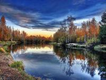 rzeka w brzozowym lesie - rzeka w brzozowym lesie