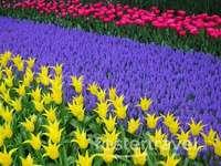 Цветно в градината на
