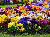 Градински цветове през пролетта
