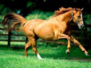като коне в галоп - като коне в галоп, пъзели за децата ми