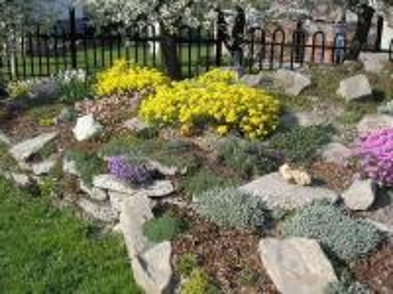 jardín colorido - Kwiaty w śród głazów