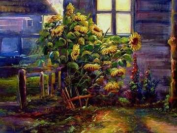 chata,słoneczniki,płot