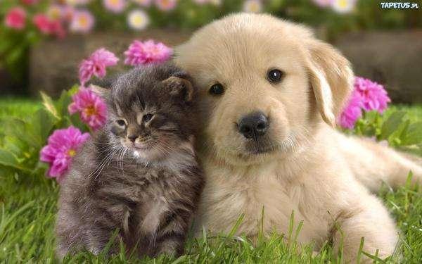 Kotek i Pisek - Kot i Pies. Pies i kot Oli. Ułóż puzzle 3 na 3. Ułóż puzzle 8 na 8. Ułóż pasujące elementy (14×9)