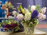 hyacinter olika sorter