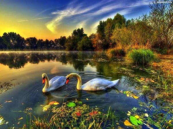 labutě, jezero, les (10×10)