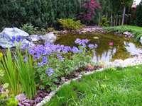 a brook in the Botanical Garde - strumyk w Ogrodzie Botanicznym