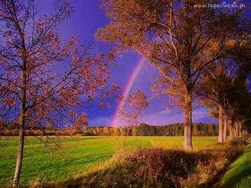 pejzaż,tęcza,kolory drzew - pejzaż,tęcza,kolory drzew