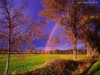 pejzaż,tęcza,kolory drzew