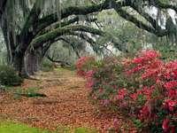 träd, busk med blommor, gränd
