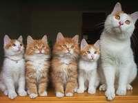Katter för Irenka 2