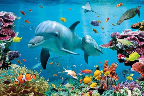 Monde sous marin casse-tête en ligne