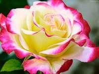 Blommadrottning