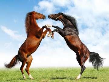 cavalli in piedi - Spróbuj ułożyć te konie!