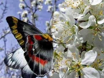 Blommande äppelträd och fjäril