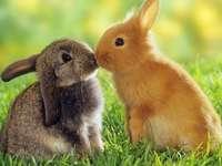 Velikonoční zajíčky