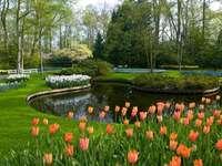 tuin, tulpen, pool - tuin, tulpen, zwembad