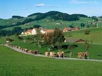 Schweizisk by