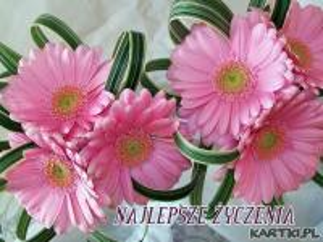 pink gerberas - kwiaty, kwiaty,kwiaty