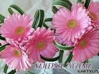 gerberas rosadas