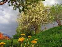 spring vibes - tree, flowers - wiosenne klimaty-drzewo,kwiaty