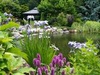 a pond surrounded by flowers,