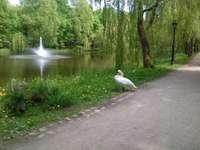 Trevligt det här min park :)