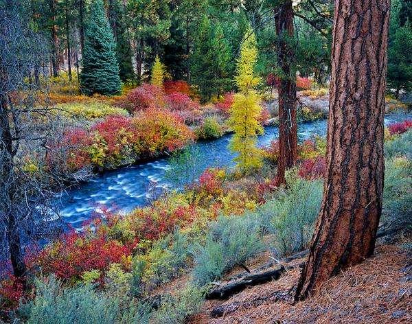 цветни растения над потока